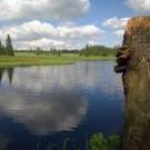 Mrtvý rybník u Božího Daru